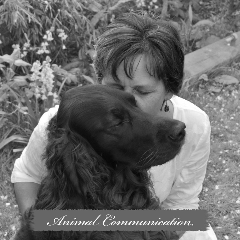 home-page-animal-communication